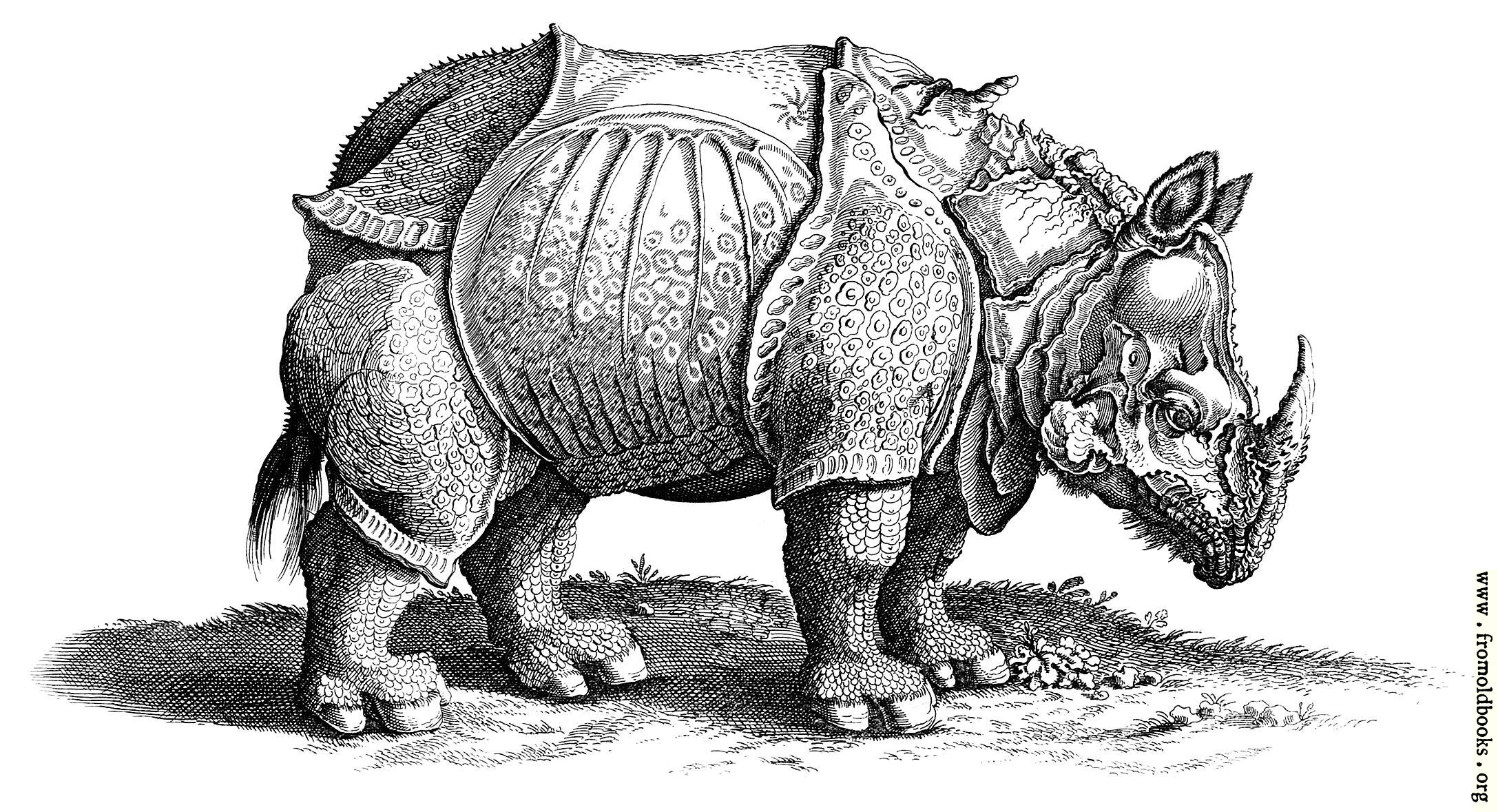 Rhinocerous Hornnase Rhinocer Engraving
