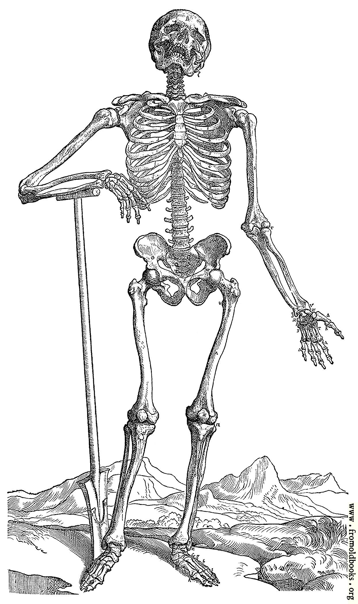 163 Skeleton With Shovel