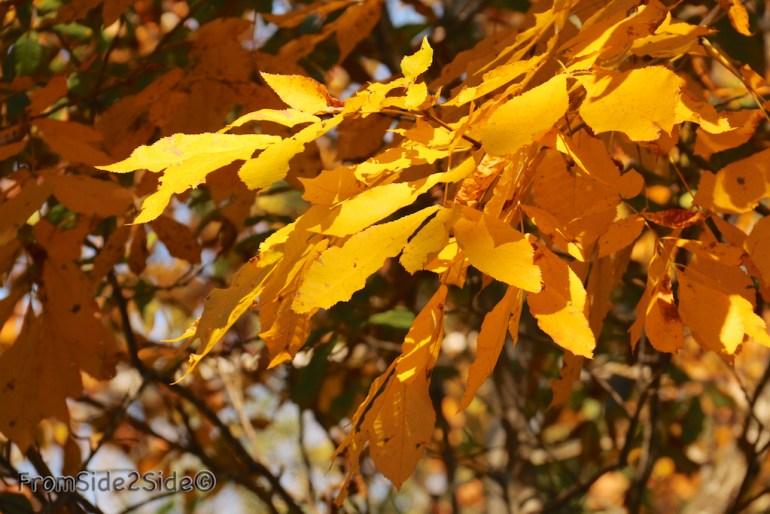 automne_2014 2