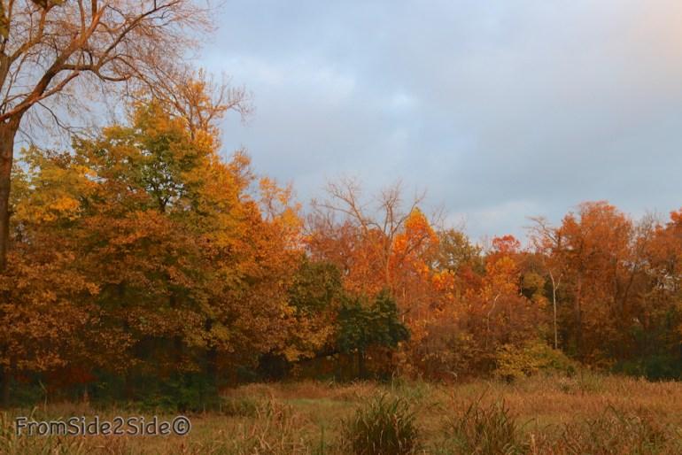 automne_2014 7 (1)
