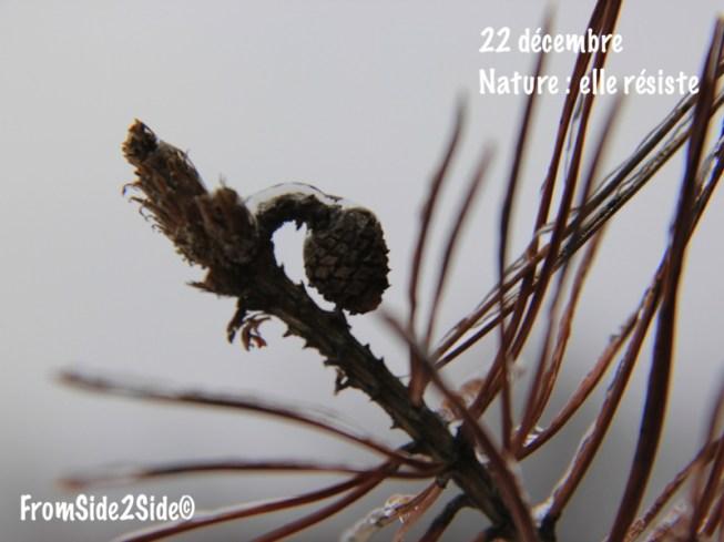 nature_22