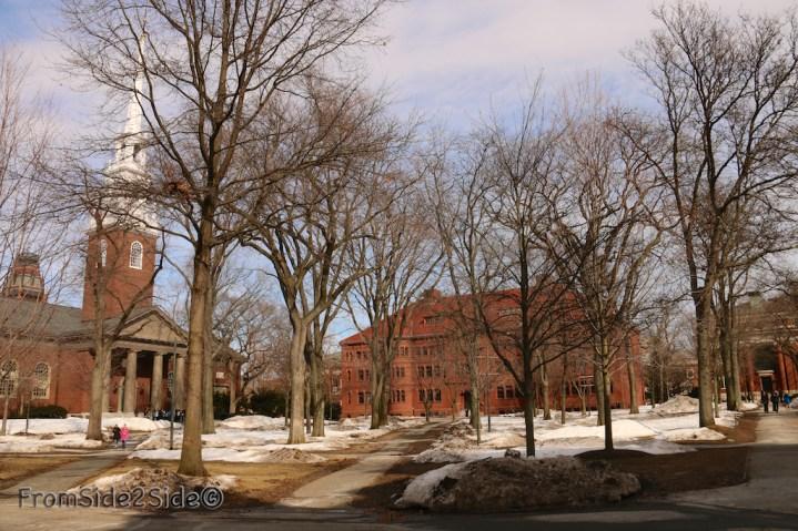 Harvard 12