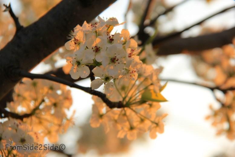 printemps 1 (1)