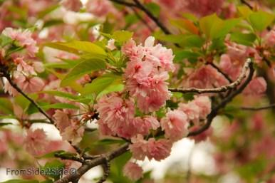 printemps 3 (2)