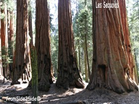 Sequoias National Park