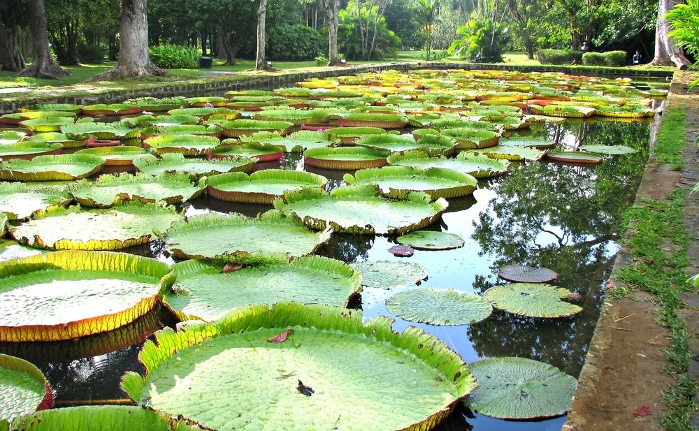 Jardin botanique de Pamplemousse chez Shutterstock