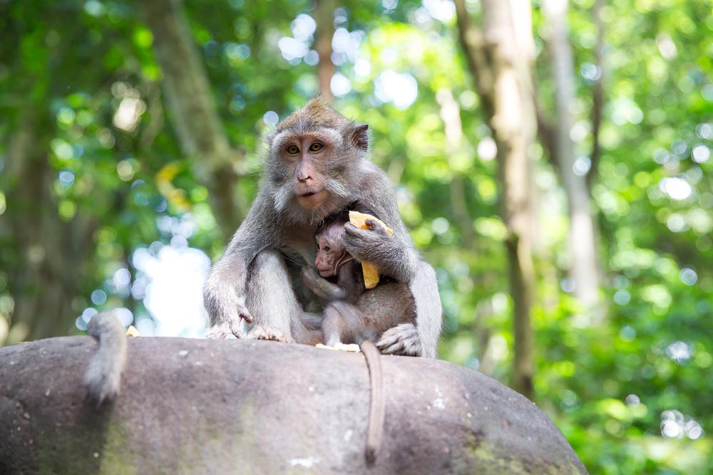 Bali et ses temples - Shutterstock
