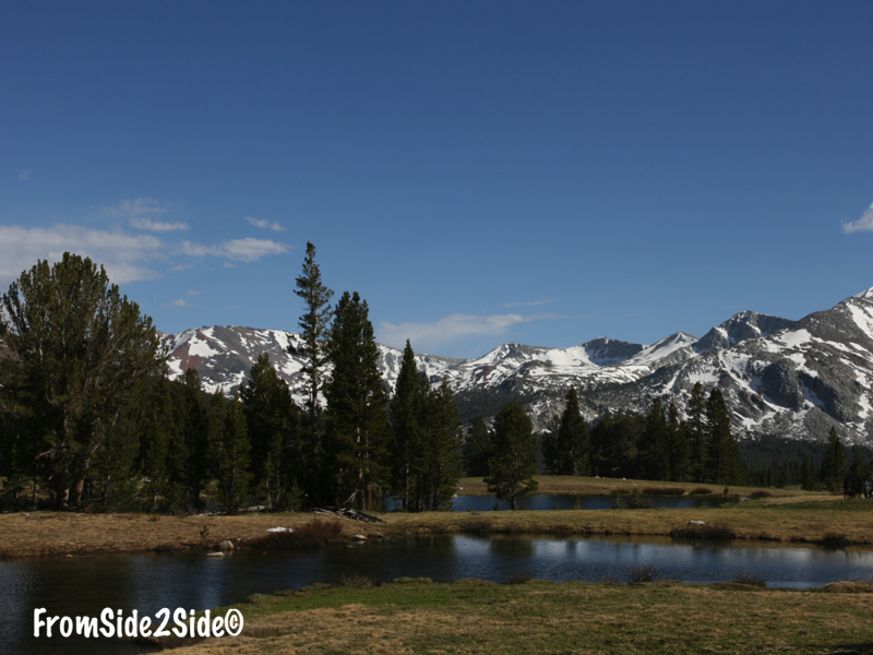 Tioga pass - Tuolumne Meadow