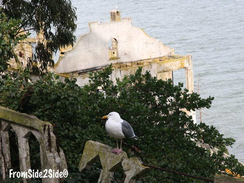 amcatraz9