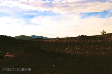craters of the moon 49