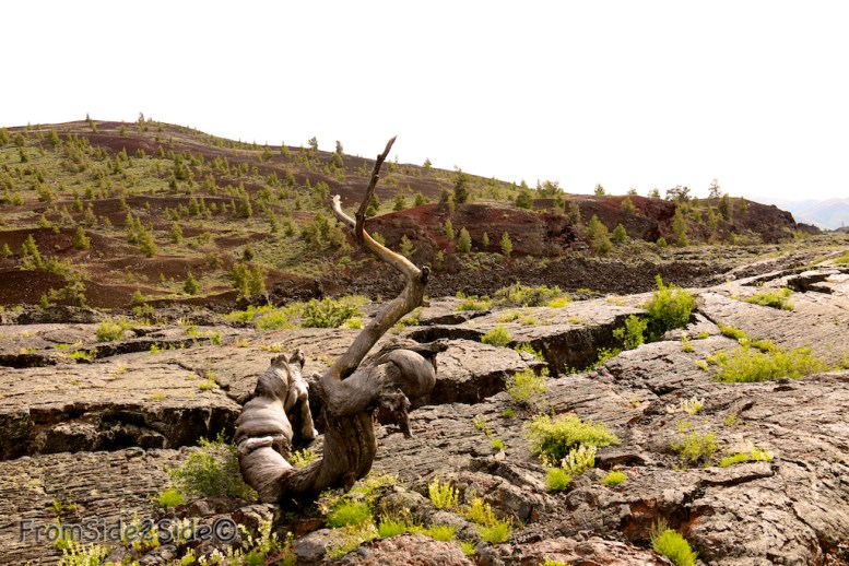 Cet arbre a plusieurs centaines d'années