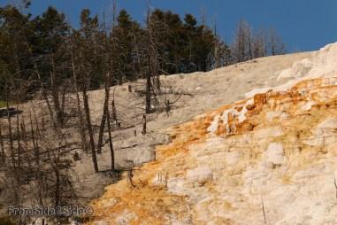 yellowstone par le nord 22