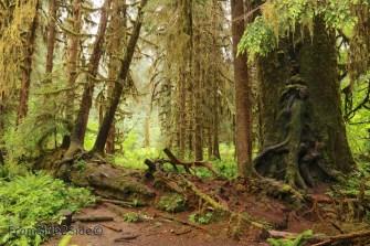 olympic-rainforest-21