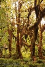 olympic-rainforest-22
