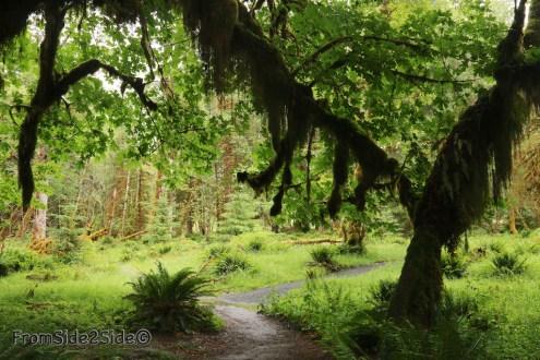 olympic-rainforest-9