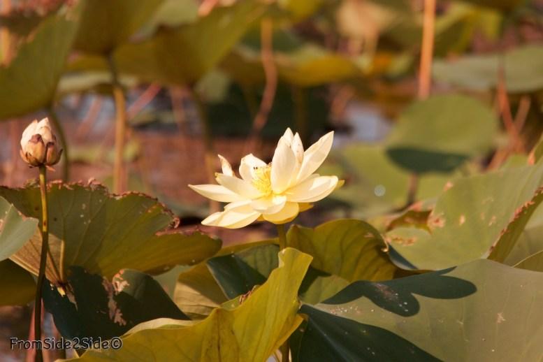 baker_wetlands 25