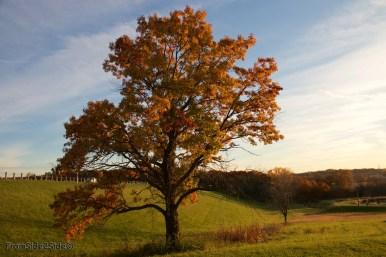 automne 8 (1)