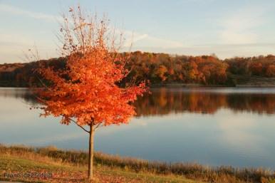 automne 9 (1)
