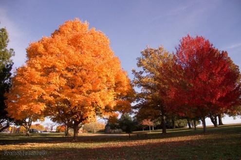 automne-SM-park 3