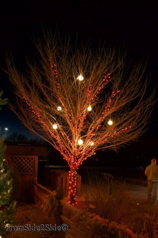 Fort Collins Noël 13