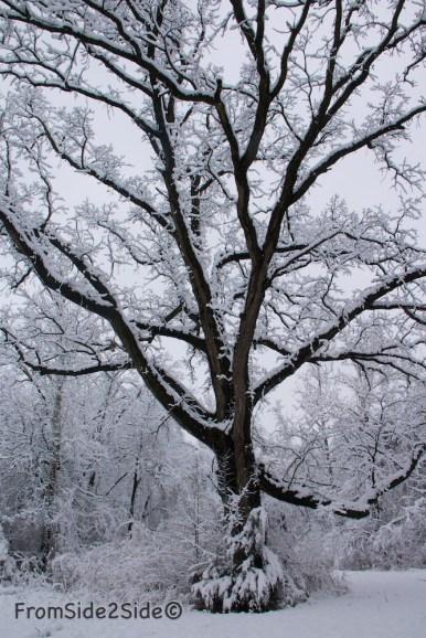 neige-jan-19 13