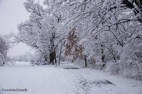 neige-jan-19 15