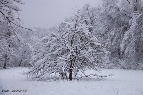 neige-jan-19 17