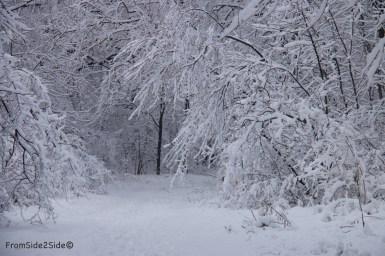 neige-jan-19 19