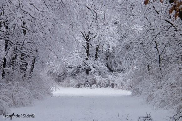 neige-jan-19 22