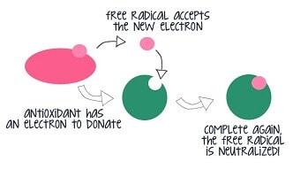 Free radical neutralized by antioxidant