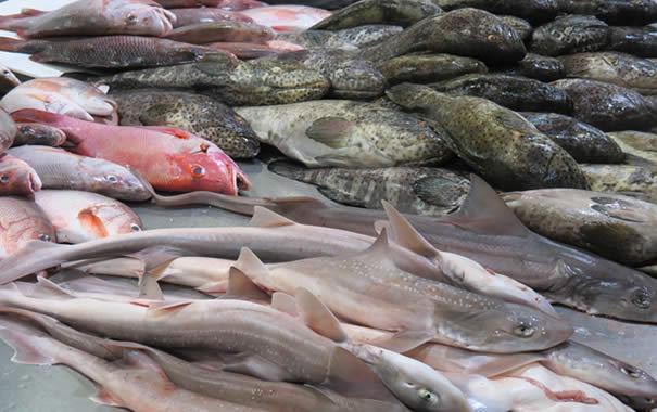 Fish - Billingsgate fish market