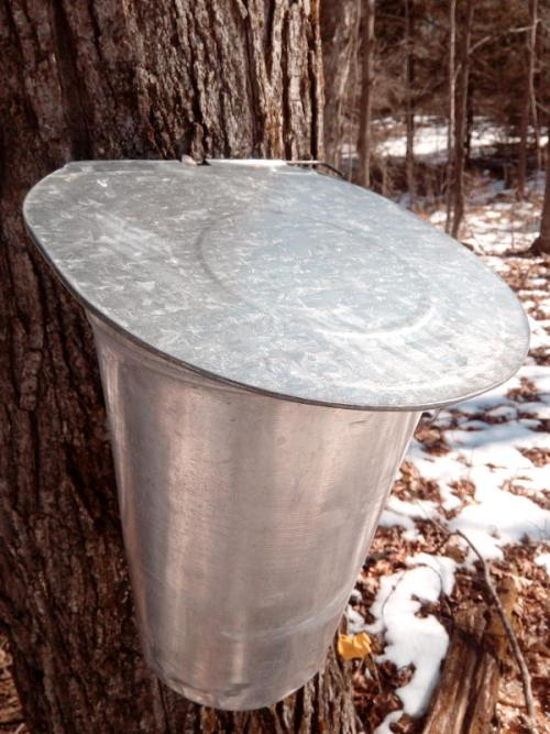 Buckets and lids DIY Maple Syrup