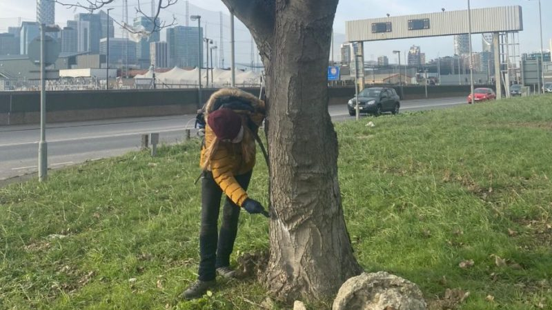Silvertown Tunnel: Campaigners attempt to delay tree removal