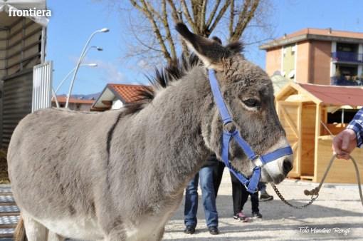 Bendedizione-Animali-Sant'Antonio-Abate-al-Mako-foto-Massimo-Renzi-37