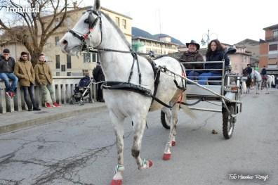 Cavalli-Infiocchettati-2016-foto-Massimo-Renzi-58