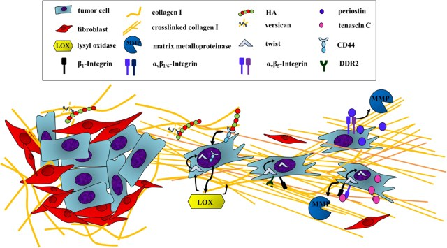 Frontiers - Targeting ECM Disrupts Cancer Progression ...