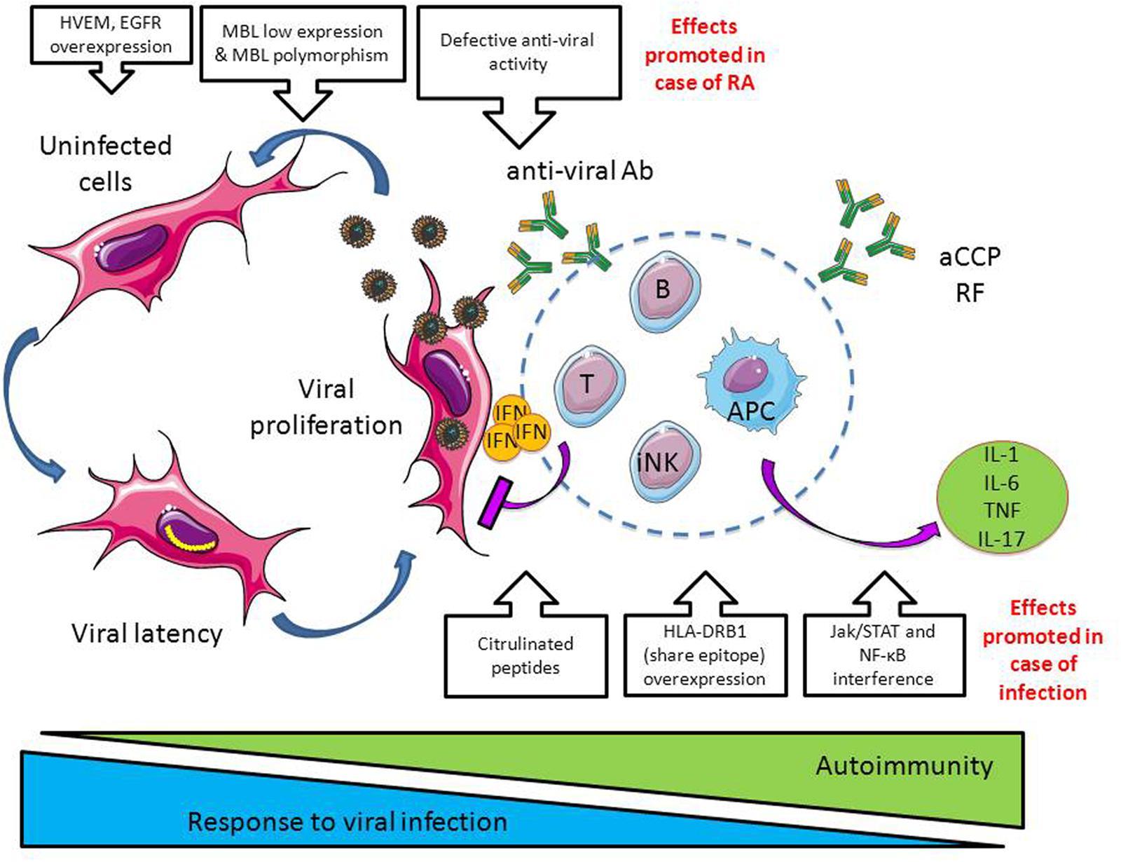 Infection Amp Autoimmunity