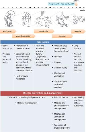 Frontiers   Biomarkers for Bronchopulmonary Dysplasia in