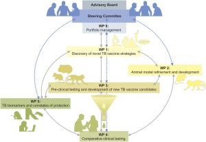 Frontiers | TBVAC2020: Advancing Tuberculosis Vaccines from Discovery to Clinical Development