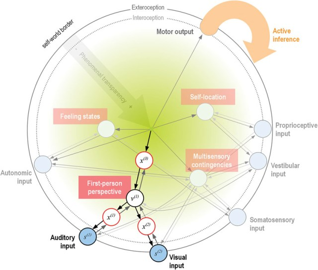 Frontiers   Minimal self-models and the free energy ...