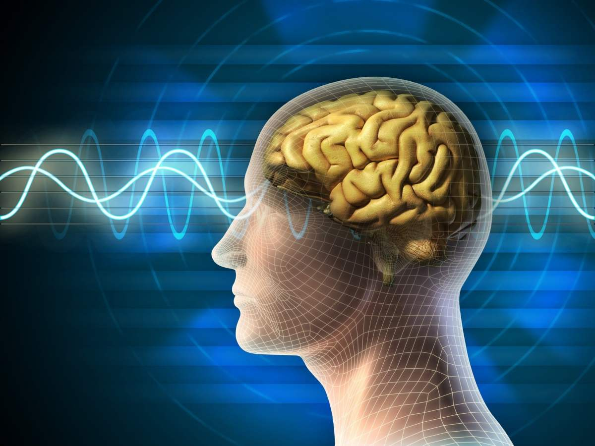 Human Brain States of Meditation