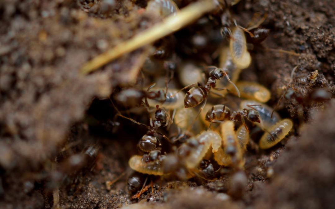 What Flying Termites Look Like and How to Get Rid of Them