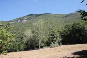 Salviamo il Bosco delle Lucinette nella Valle dei Monasteri.