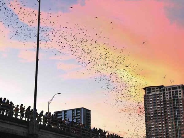 Gather on the Congress Bridge to watch the bats migrate. It is a unique site to be seen in Austin, TX! Find out what else there is to do in the hip city of Austin.