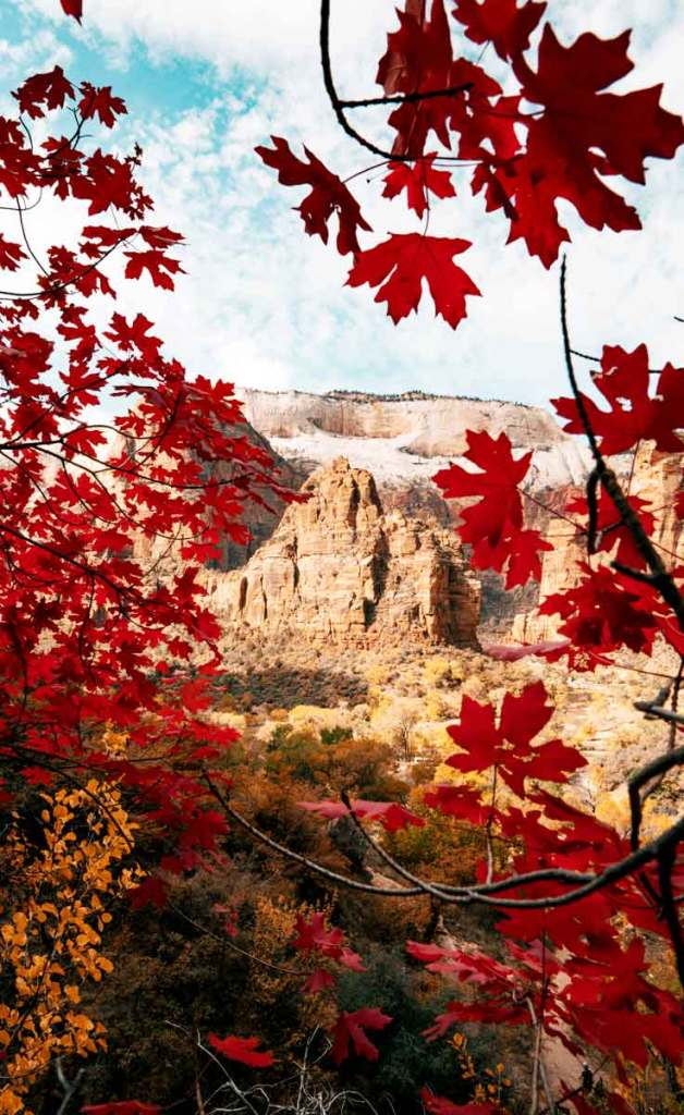 Red Fall foliage overlooking Angels Landing at Zion National Park in Utah