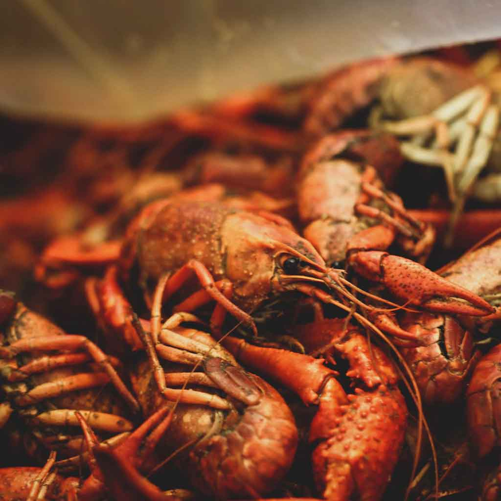 Closeup of a pile of bright red, cooked, crawfish.