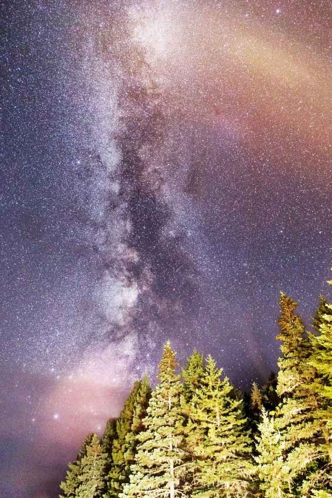 Thousands of stars against a dark purplish-blue sky with evergreen trees in the foreground.