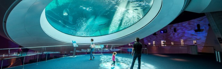 Top Fun Things To Do In Miami - Frost Science Aquarium ...