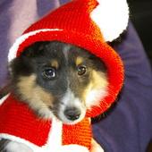TRICOT : capuchon de Noël pour chien TUTORIEL GRATUIT - Le blog de crochet et tricot d'art de Suzelle