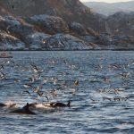 Walvissen spotten. Foto: Christian Engelke -Oceanwide Expeditions ©